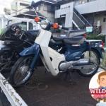 天白区八事山 バイク買取 スーパーカブ50(AA01)
